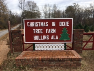 Christmas In Dixie.Christmas In Dixie Tree Farm Continues Family Traditions